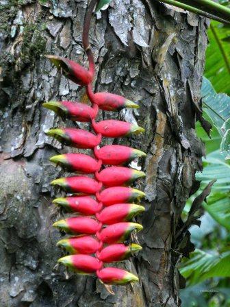 Jardin Botanico de Quindio (62)