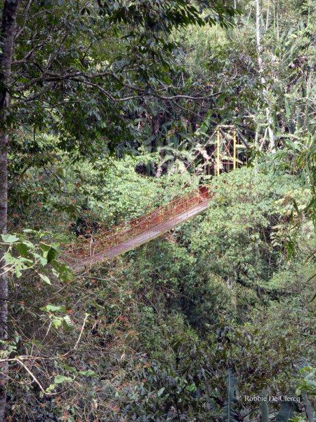 Jardin Botanico de Quindio (63)