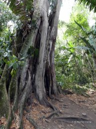 Jardin Botanico de Quindio (64)