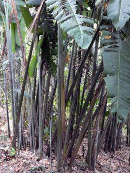 Jardin Botanico de Quindio (65)