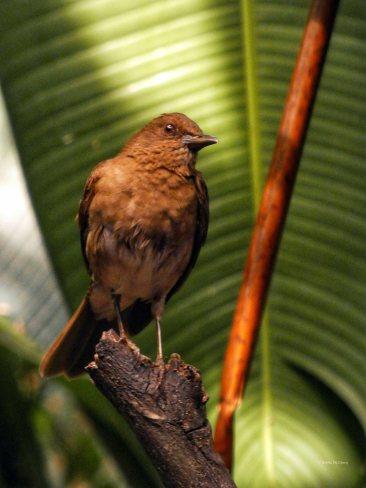 Jardin Botanico de Quindio (73)
