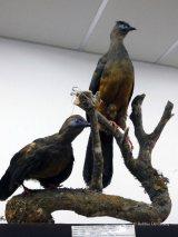 Museo de Historia Natural (17)