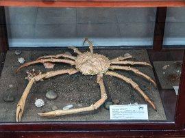 Museo de Historia Natural (2)