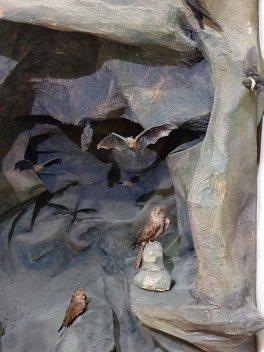 Museo de Historia Natural (20)