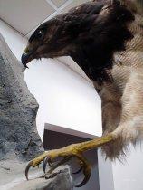 Museo de Historia Natural (24)