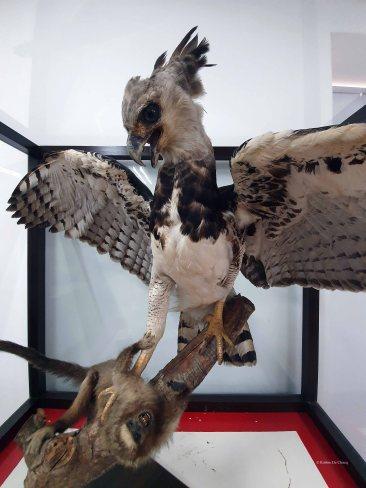 Museo de Historia Natural (25)