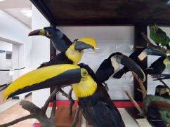 Museo de Historia Natural (27)