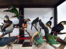 Museo de Historia Natural (28)