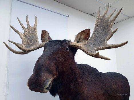 Museo de Historia Natural (29)