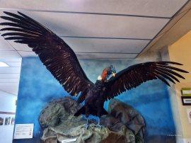 Museo de Historia Natural (3)