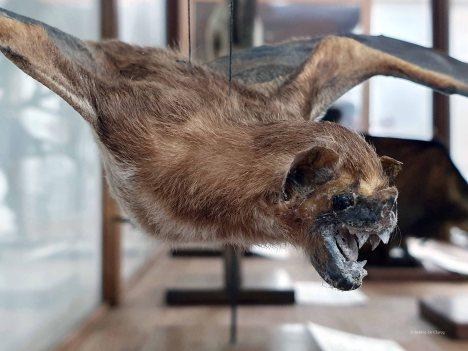 Museo de Historia Natural (30)