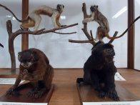 Museo de Historia Natural (32)