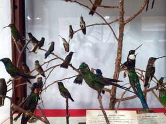 Museo de Historia Natural (6)