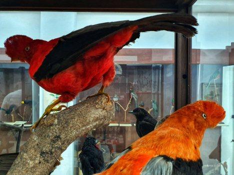 Museo de Historia Natural (7)