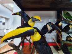 Museo de Historia Natural (9)