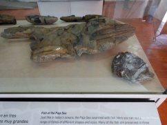 Museo El fossil (2)