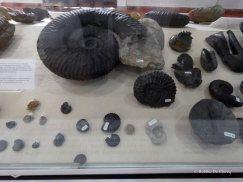 Museo El fossil (4)