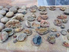 Museo El fossil (6)