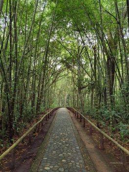 Parque Arqueologico (49)