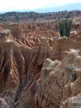 Tatacoa desert (17)