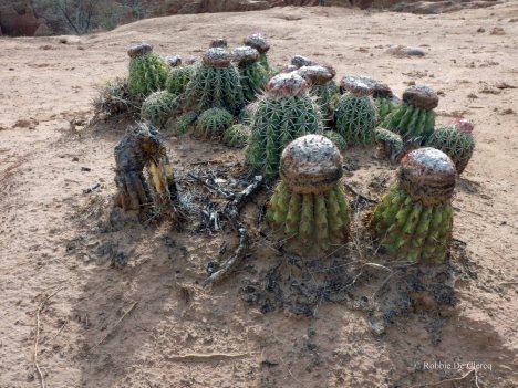 Tatacoa desert (18)