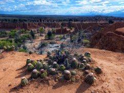 Tatacoa desert (24)