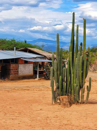 Tatacoa desert (3)