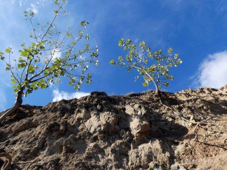 Tatacoa desert (32)
