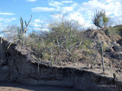 Tatacoa desert (39)