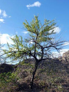 Tatacoa desert (40)
