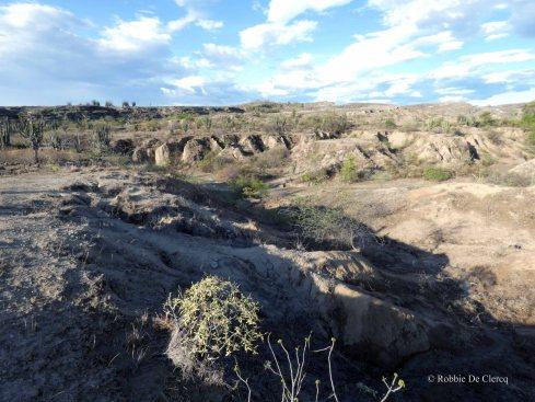 Tatacoa desert (43)