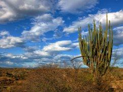 Tatacoa desert (45)