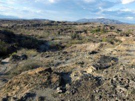 Tatacoa desert (47)