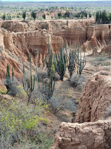 Tatacoa desert (49)