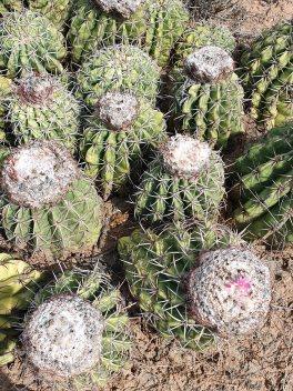 Tatacoa desert (50)