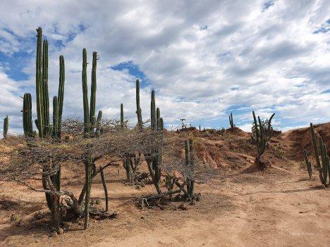 Tatacoa desert (51)