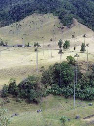 Valle de Cocoras (1)