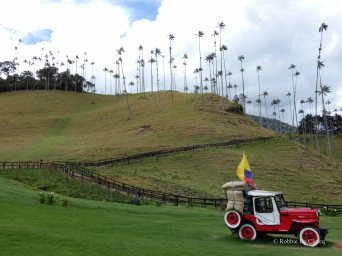 Valle de Cocoras (10)