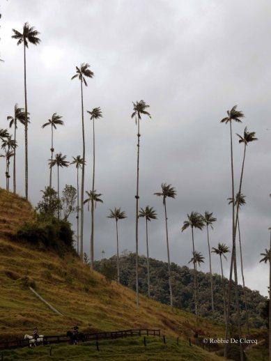 Valle de Cocoras (11)