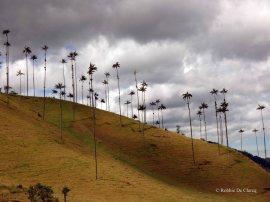 Valle de Cocoras (12)