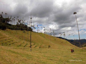 Valle de Cocoras (13)