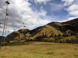 Valle de Cocoras (14)