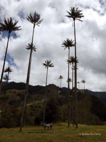 Valle de Cocoras (15)