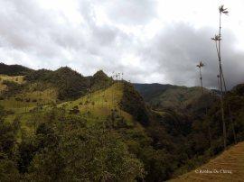 Valle de Cocoras (16)