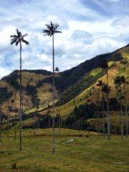 Valle de Cocoras (17)