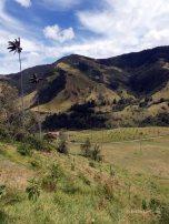 Valle de Cocoras (18)