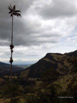 Valle de Cocoras (19)