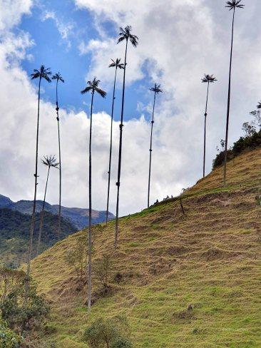 Valle de Cocoras (2)