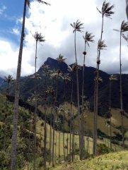 Valle de Cocoras (20)