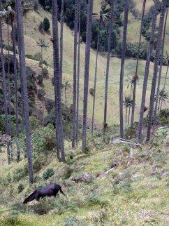 Valle de Cocoras (21)